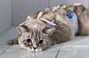 Всё, что нужно знать про стерилизацию кошек